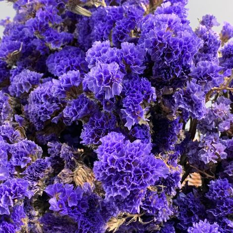Statice, Blue bunch, approx. 75cm tall Natural dried flowers. Indigenous UK grown