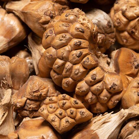 Druid Garlic 1 kg bag, approx. 3 cm diameter, natural, dried floral deco