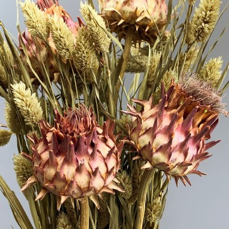 Cynara Crimson, approx. 50 cm tall by 10 diameter dried flower stem