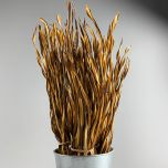 Fire Grass - www.BrandonThathers.co.uk