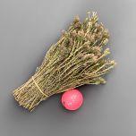 Thyme 30cm - www.BrandonThatchers.co.uk