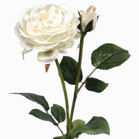 Vintage Rose - Cream