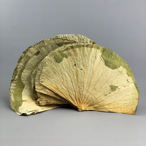 Lotus Leaf, 10 pack, approx. 45 cm by 35 cm natural dried leaves