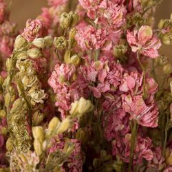 Dried Flowers, Grasses & Herbs