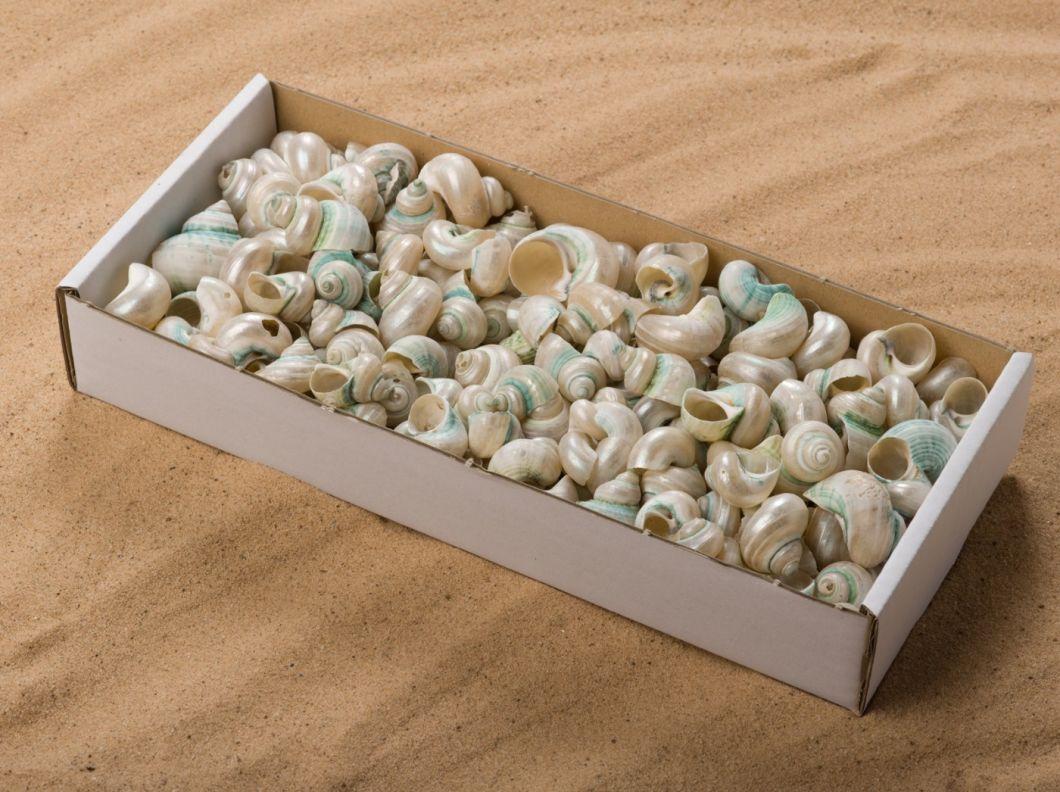 SHELL PEARL SNAIL BOX.jpg
