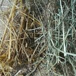 Hay and Straw.JPG
