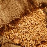 Cereal Grains – www.BrandonThatchers.co.uk