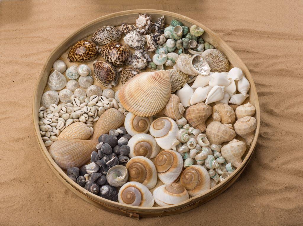 shells.jpg