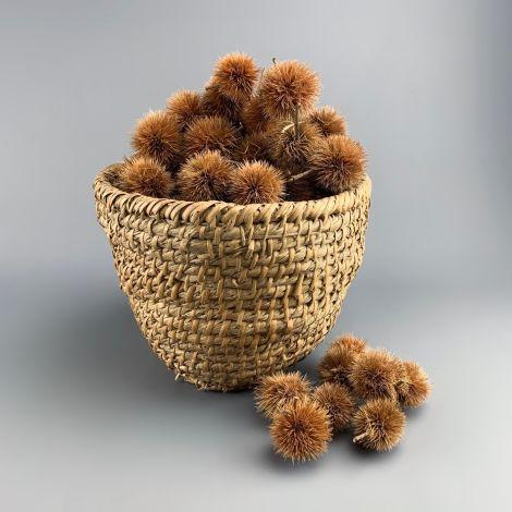 Kartoos Pod x 20, each approx. 5 cm diameter, Natural Dried Floral Deco