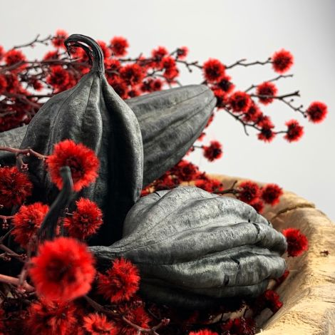 Jingha Fruit x 3, random sizes from 7 to 15 cm long by 4 to 6 cm diameter, natural, dried floral deco