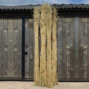 Elephant-Grass-1-e1506596482762.jpg