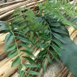 Mahonia Leaf 80 cm - www.BrandonThatchers.co.uk
