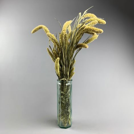 Setaria, approx. 79 cm long by 10 cm wide dried bunch
