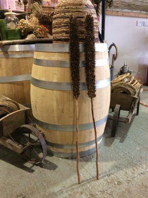 Cyrus Stem, approx. 115 cm, dried- www.BrandonThatchers.co.uk