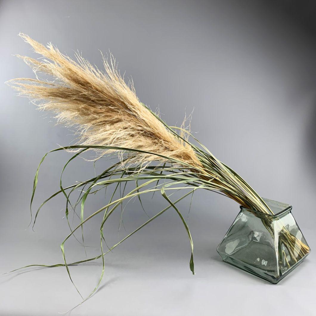 Pampas Grass x 5 stems 1m - www.BrandonThatchers.co.uk