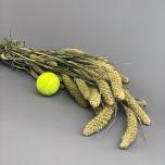 Setaria, approx. 79 cm - www.BrandonThatchers.co.uk