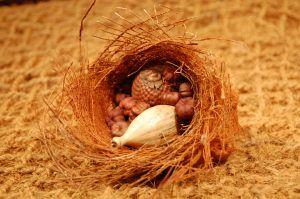 Brandon-Thatchers-palm-leaf-roll-putka-pods-dried-wild-orange-dried-seed-head-coir-pillow-exotics-e1506435617841.jpg