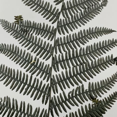 Fern 6 Pack Black olive, approx. 55 cm length, preserved fronds
