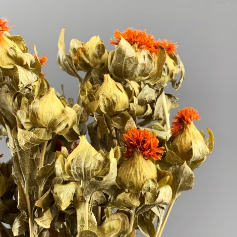 Carthamus Orange , 70 cm dried flower floral decoration