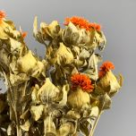 Carthamus Orange, 70 cm, dried- www.BrandonThatchers.co.uk