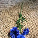 Cornflower blue, 65cm - www.BrandonThatchers.co.uk
