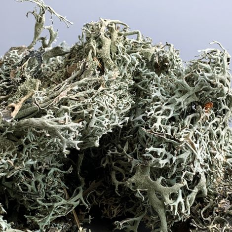 Litchen Tree Moss, silver grey x 500g approx, natural dried floral deco