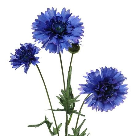 Cornflower blue, 65cm - www.BrandonThatchers.co.uk