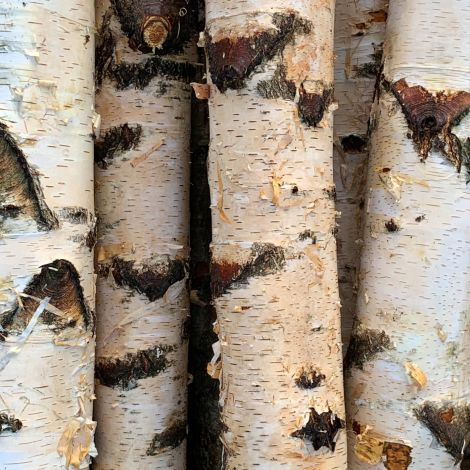 "Silver Birch Poles With Bark, approx. dia. 3, 4, 5, or 6"". 3.6 m length. Grown & logged in the UK"