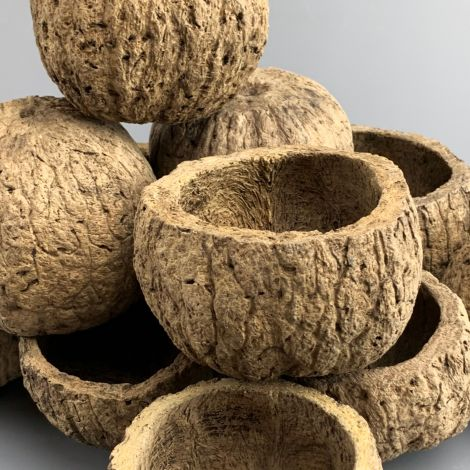 Coconut Shell x 10, approx. 8 to 10 cm diameter, natural, dried floral deco