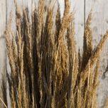 Water Reed Bundle – www.BrandonThatchers.co.uk