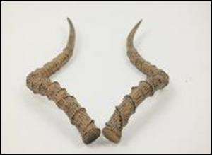 Antilope-Horn-42x20x6-e1506606465720.png