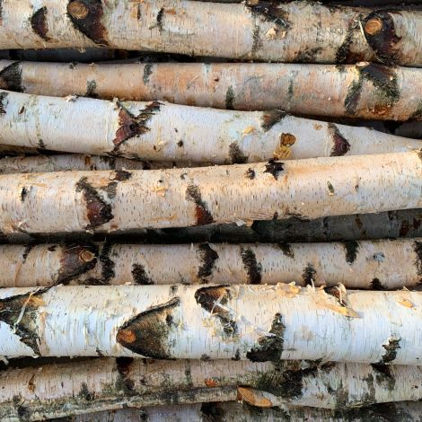 """Silver Birch Poles With Bark, approx. dia. 3, 4, or 6"""". 3.6 m length. Grown & logged in the UK"""