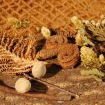 Brandon-Thatchers-bark-sheet-brown-platyspernum-woody-pear-palm-ring-coconut-twig-brunia-forgives-hops-banana-stem-eucalyptus-star-e1506438857372.jpg
