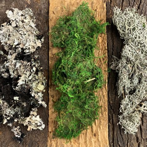 Lichen Moss Mix-Up Variety Box, 750-gram. grey lichen, sphagnum moss & foliose lichen. natural dried floral deco