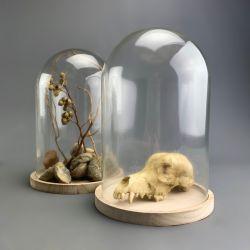 Shells & Fishing