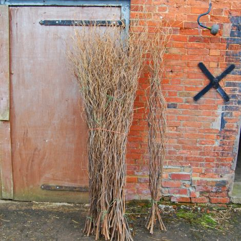 Contorted Willow x 10 stems, approx. mixture 1.2 m to 2.5 m tall. Natural, dried material