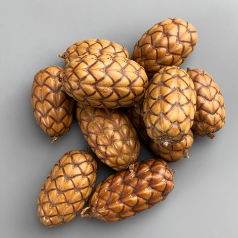 Dragon Egg Cones x 10, approx. 6 cm long by 4 cm diameter, natural, dried floral deco