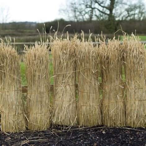Straw Bundle, approx. 1.2 m tall by 40 cm diameter. Complete with ears, 90% of corn removed. Natural, dried, UK grown cereal crop