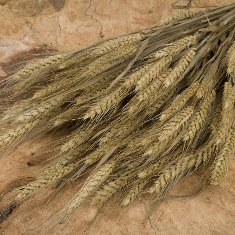 Wheat Bearded, approx. 66 cm tall by 20 cm wide dried cereal bundle
