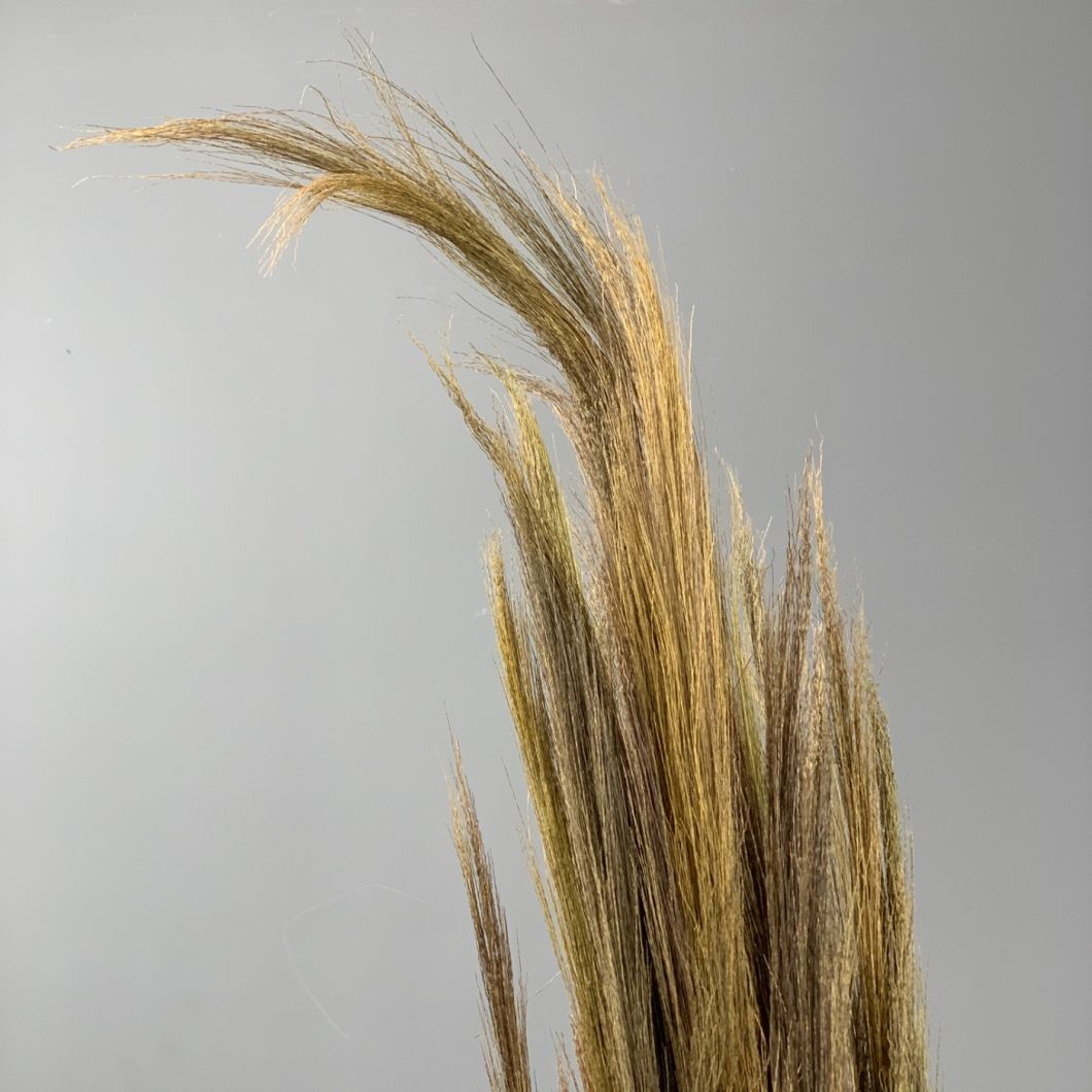 Goose feather sedge - www.BrandonThathers.co.uk