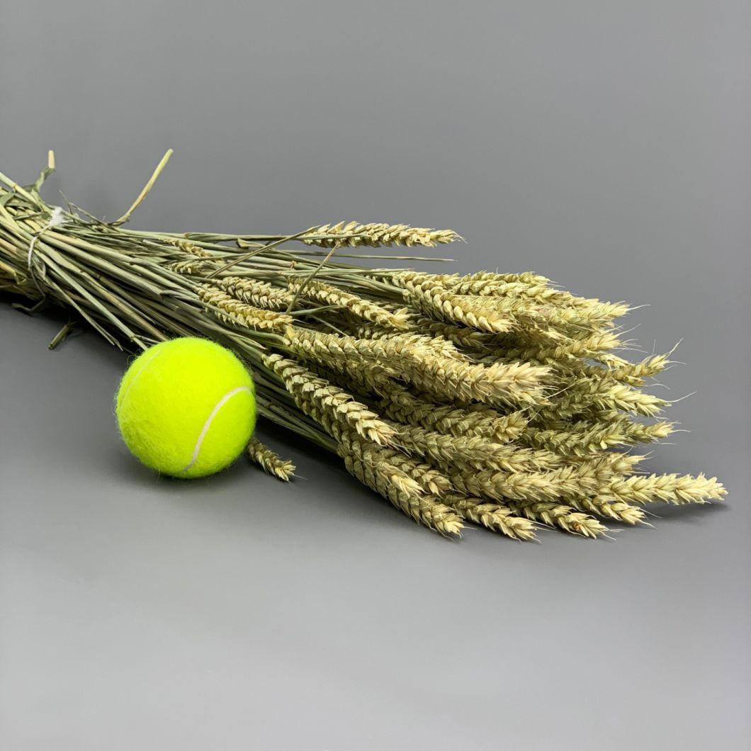 Wheat, approx. 66 cm - www.BrandonThatchers.co.uk