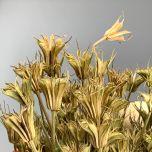 Nigella Oriental, 60cm long by 15 cm - www.BrandonThatchers.co.uk
