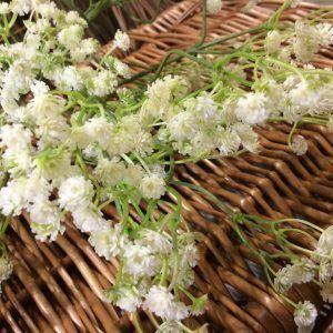 Gypsophila Spray, 30cm - www.BrandonThatchers.co.uk