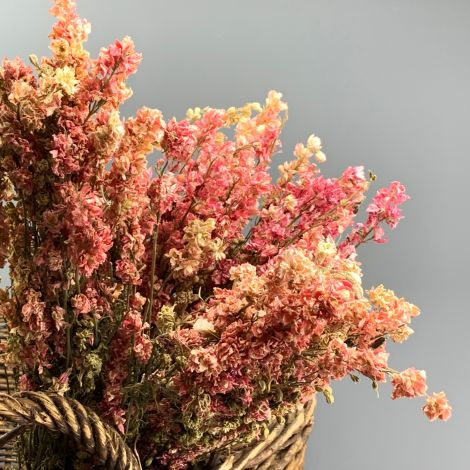 Larkspur Pink bunch, 75cm tall, natural dried flowers, indigenous UK grown