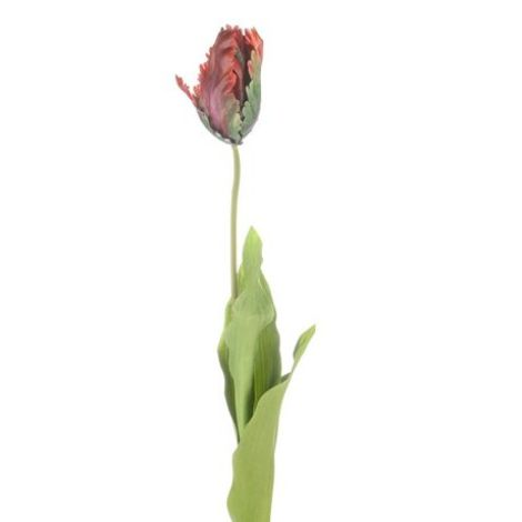 Parrot Tulip - Purple
