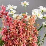 Larkspur, Pink bunch, 75cm - www.BrandonThatchers.co.uk