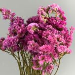 Statice Pink Bunch Dried Flower
