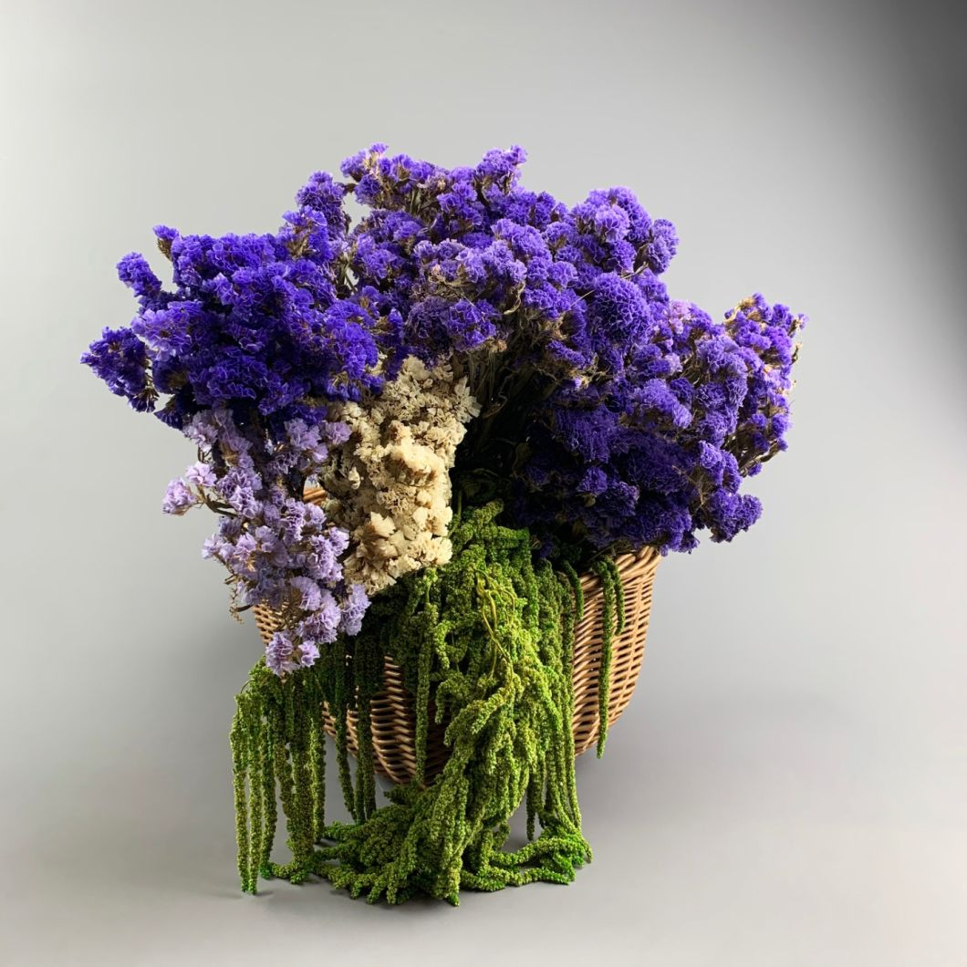 tatice, Blue bunch, approx. 75cm - www.BrandonThatchers.co.uk