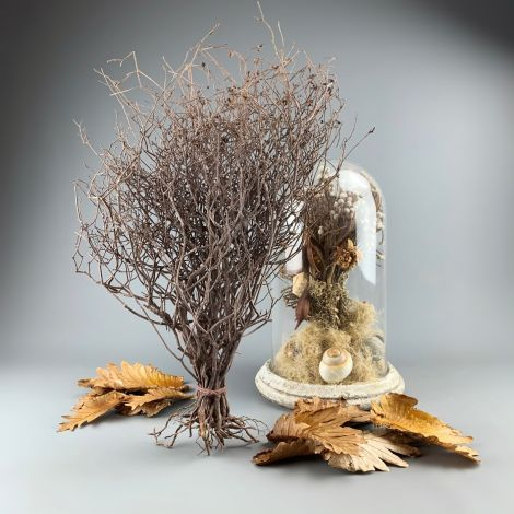 Crackle Bush approx. 50 cm tall by 30 cm wide. Natural dried floral deco