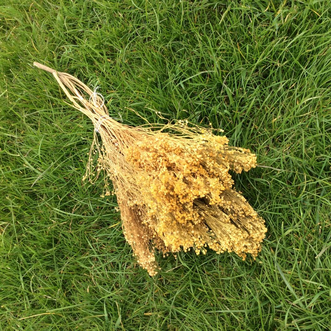 Bloom Ochre, approx. 80 cm - www.BrandonThatchers.co.uk